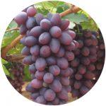 uvas de mesa isis
