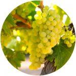 vinho fino chardonnay